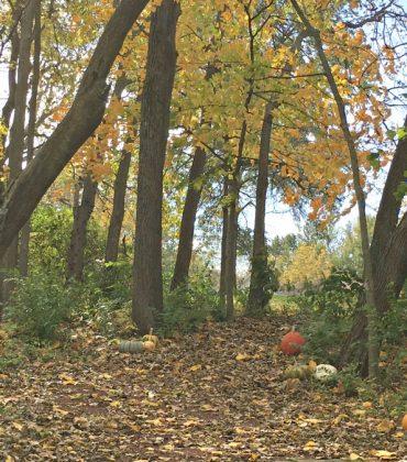 fall in love with Fall in Iowa-walk-peppermillbnb